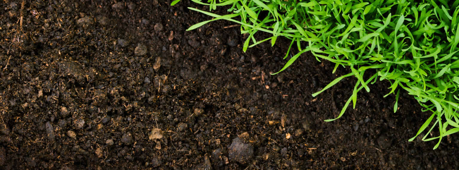 Rich, dark topsoil with perfect grass